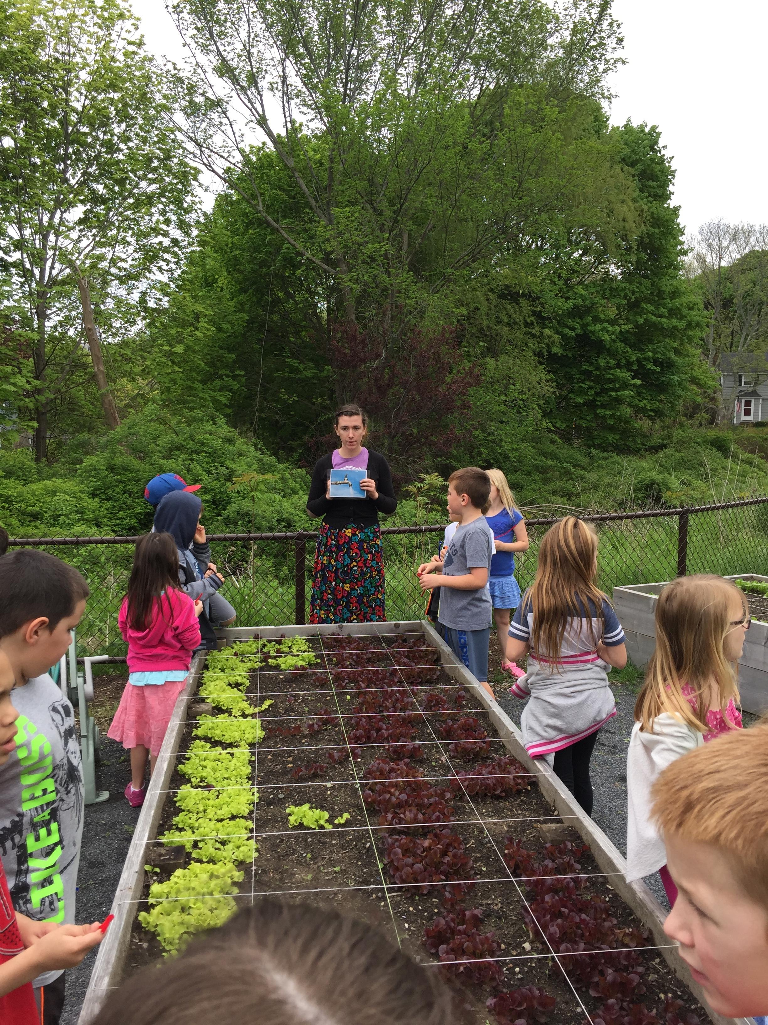 Sarah WP lesson lettuce.JPG