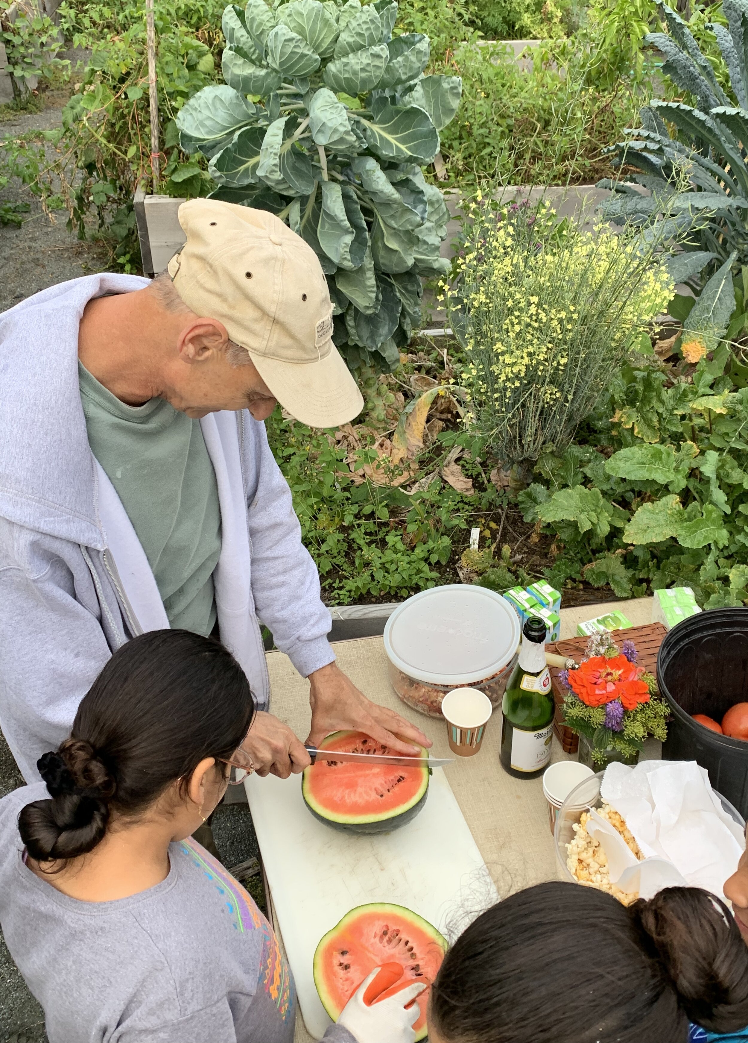 Peter DeNigris cuts freshly harvested watermelon with gardeners at Willowood Community Garden.
