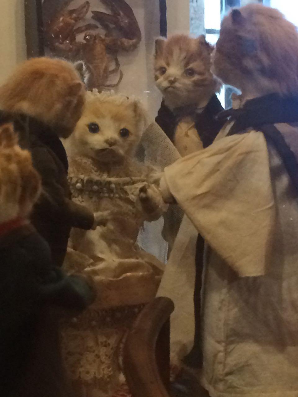 Walter Potter Kitten Wedding.jpg