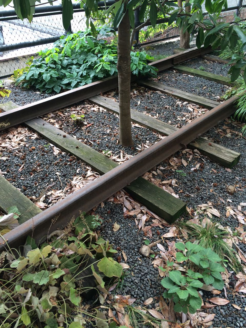 Highline Tracks.jpg