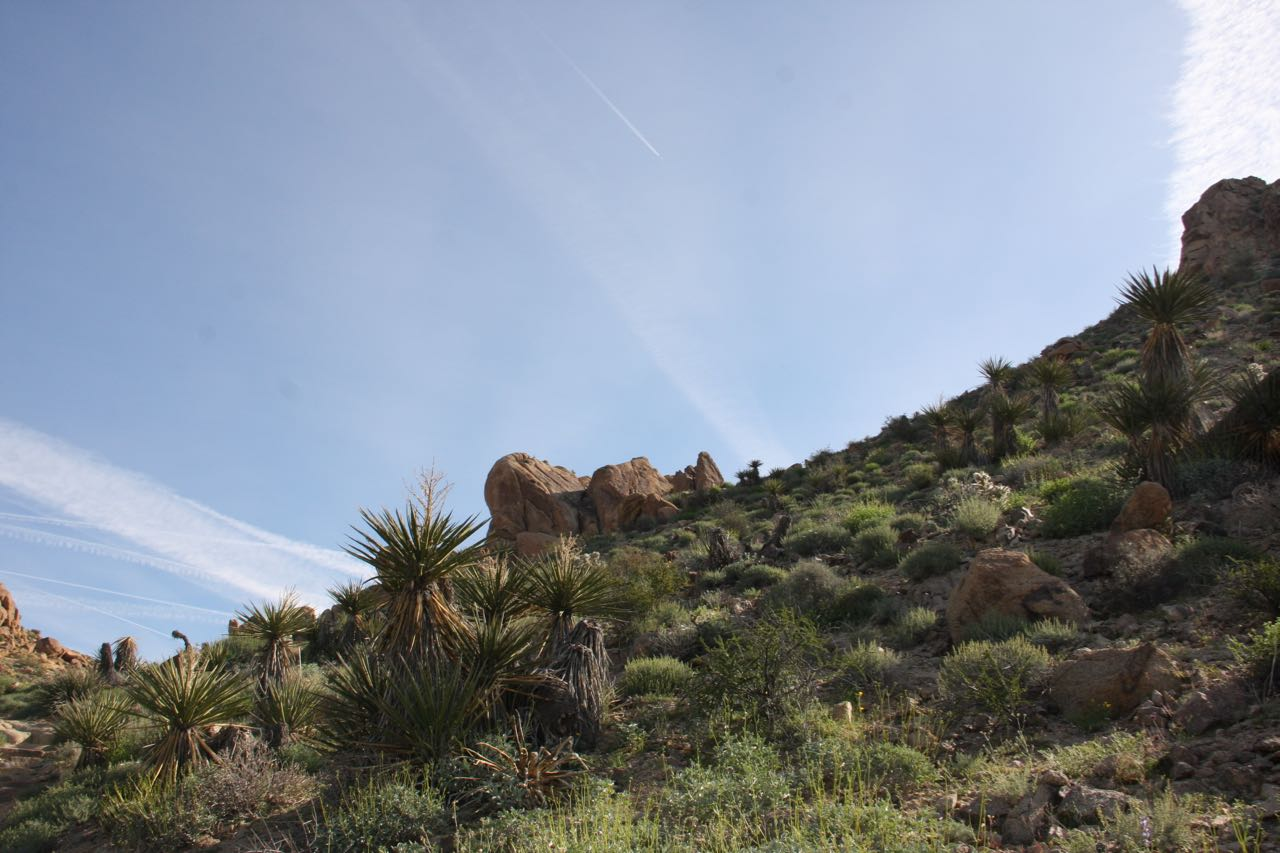 Joshua Tree Hillside