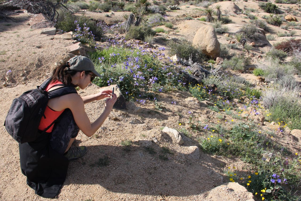 Chelsea takes pictures of flowers.jpg