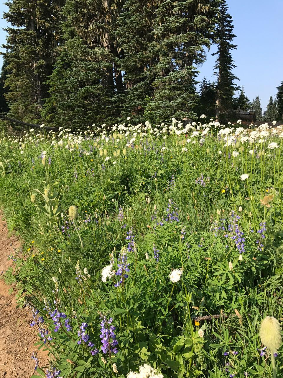 wilflowers at Ranier.jpg