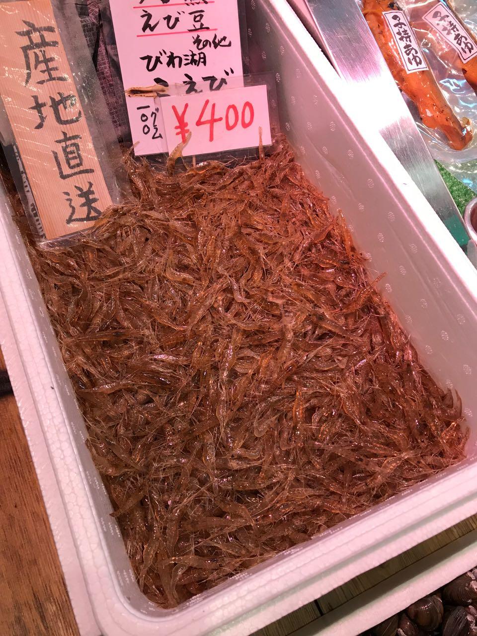 tiny shrimps.jpg