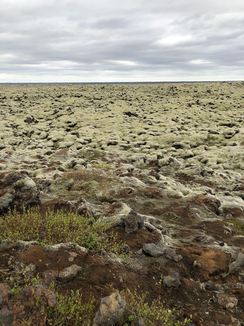 moss lands.jpg