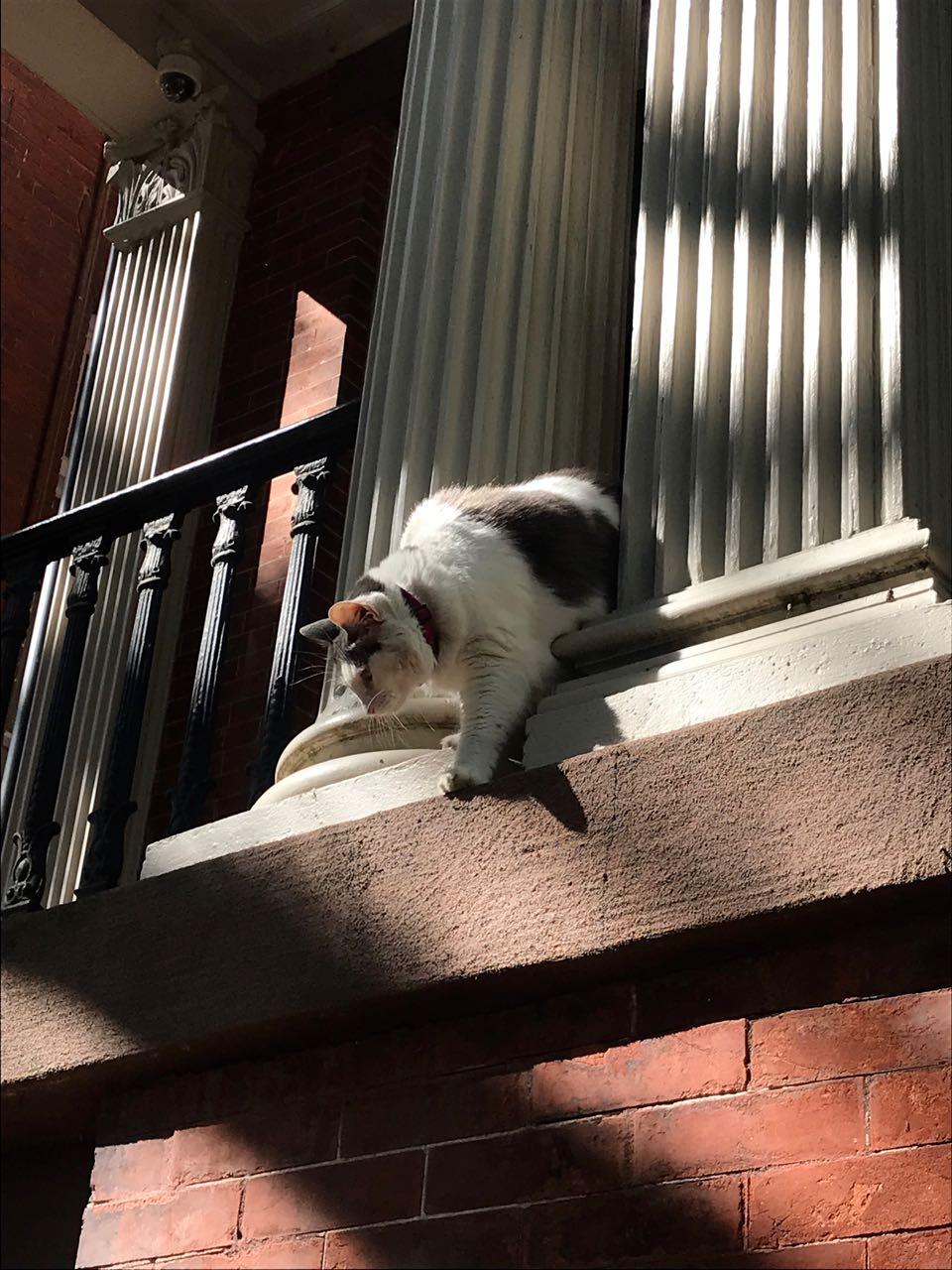 Savannah Kitty.jpg
