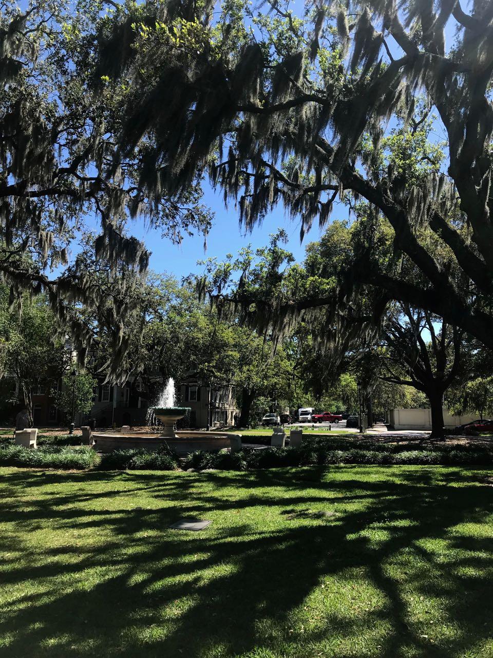 Savannah park.jpg