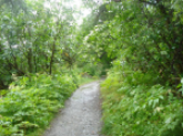 Pathway Juneu Alaska.jpg