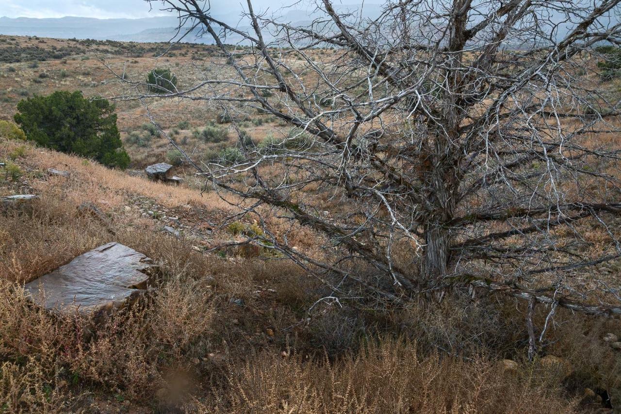 Tree along Rustlers Loop.jpeg