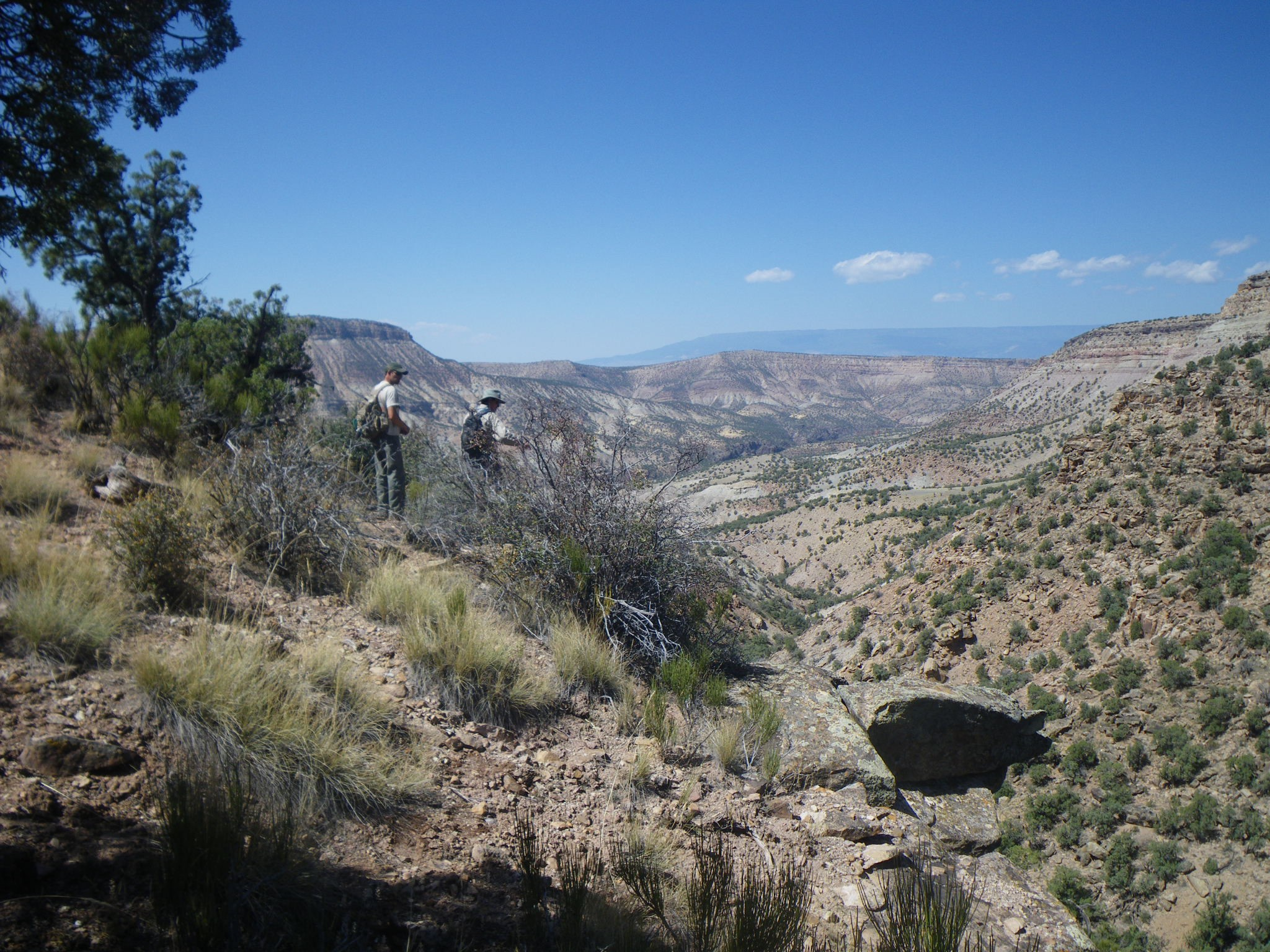 BLM staff working along the new Black Ridge Trail in the Gunnison Gorge Wilderness.