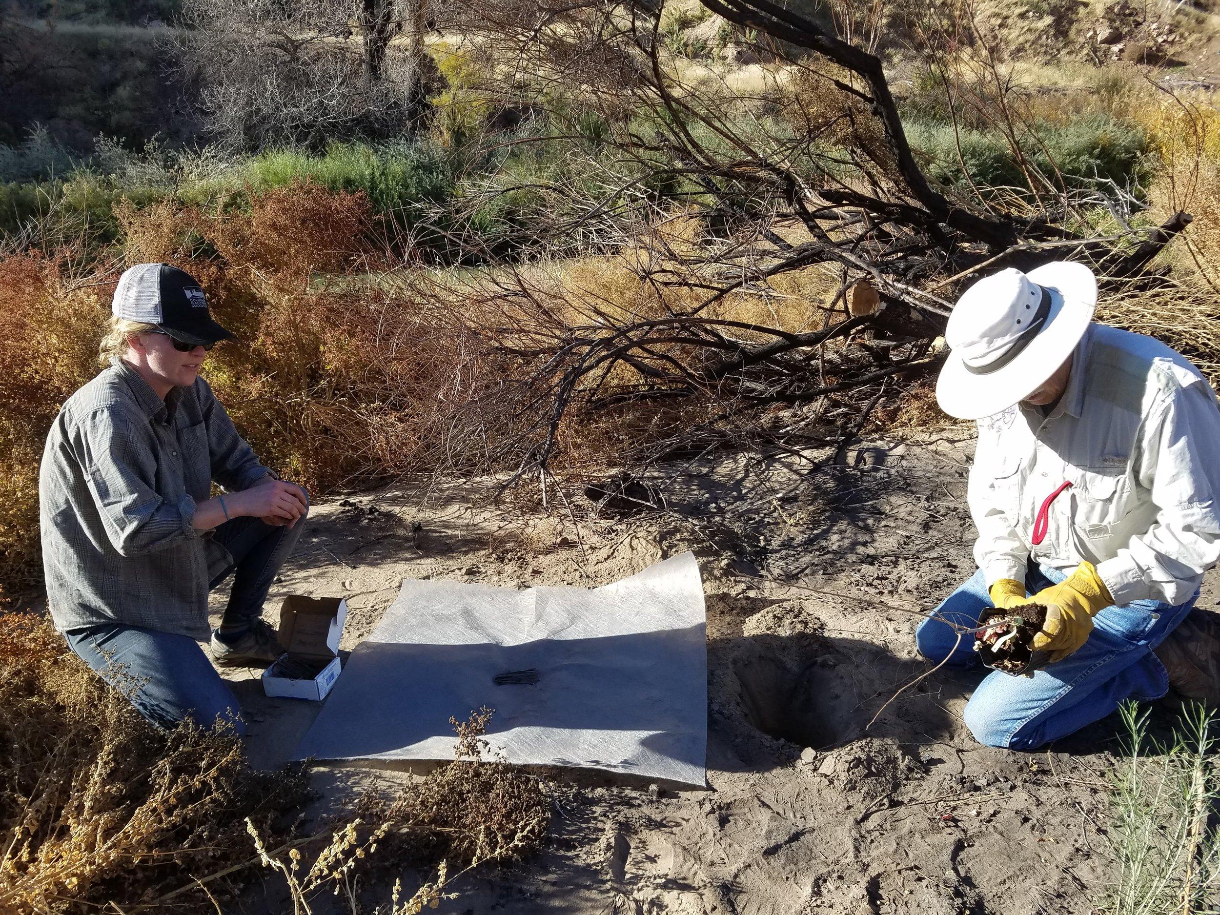 Kate and Gabe planting Sumac on Dog island.