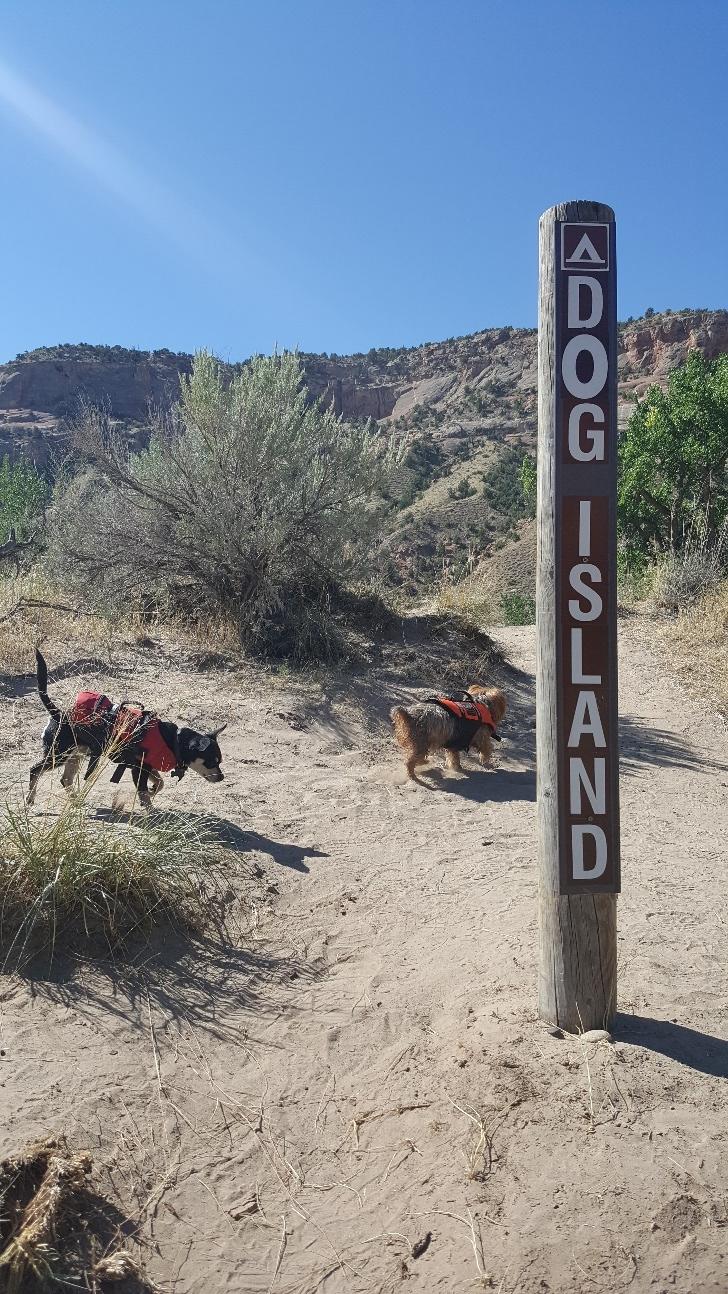 Dog Island campsite. Photo: CCA