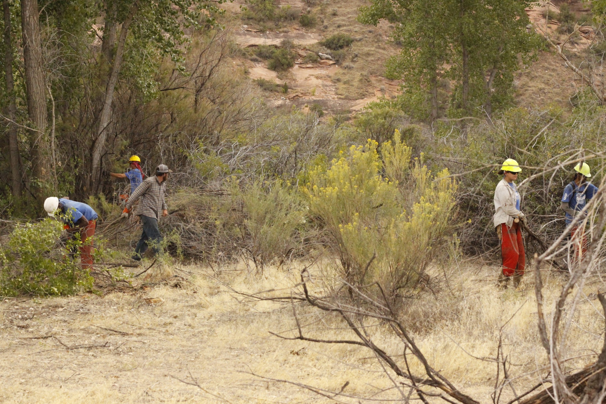 WCCC crew removing tamarisk from the Catalpa Property. Photo: John Whipple