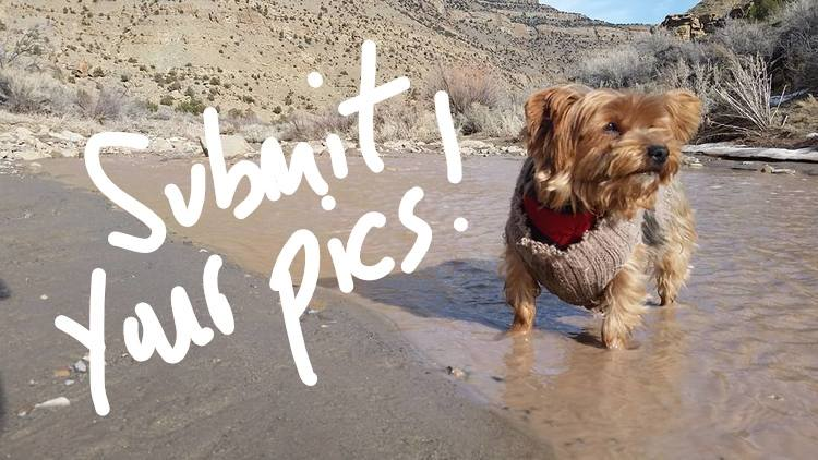 Submit pics by September 15th for a chance to win! Winners will be featured in our 2018 Calendar: Dogs of the NCAs!