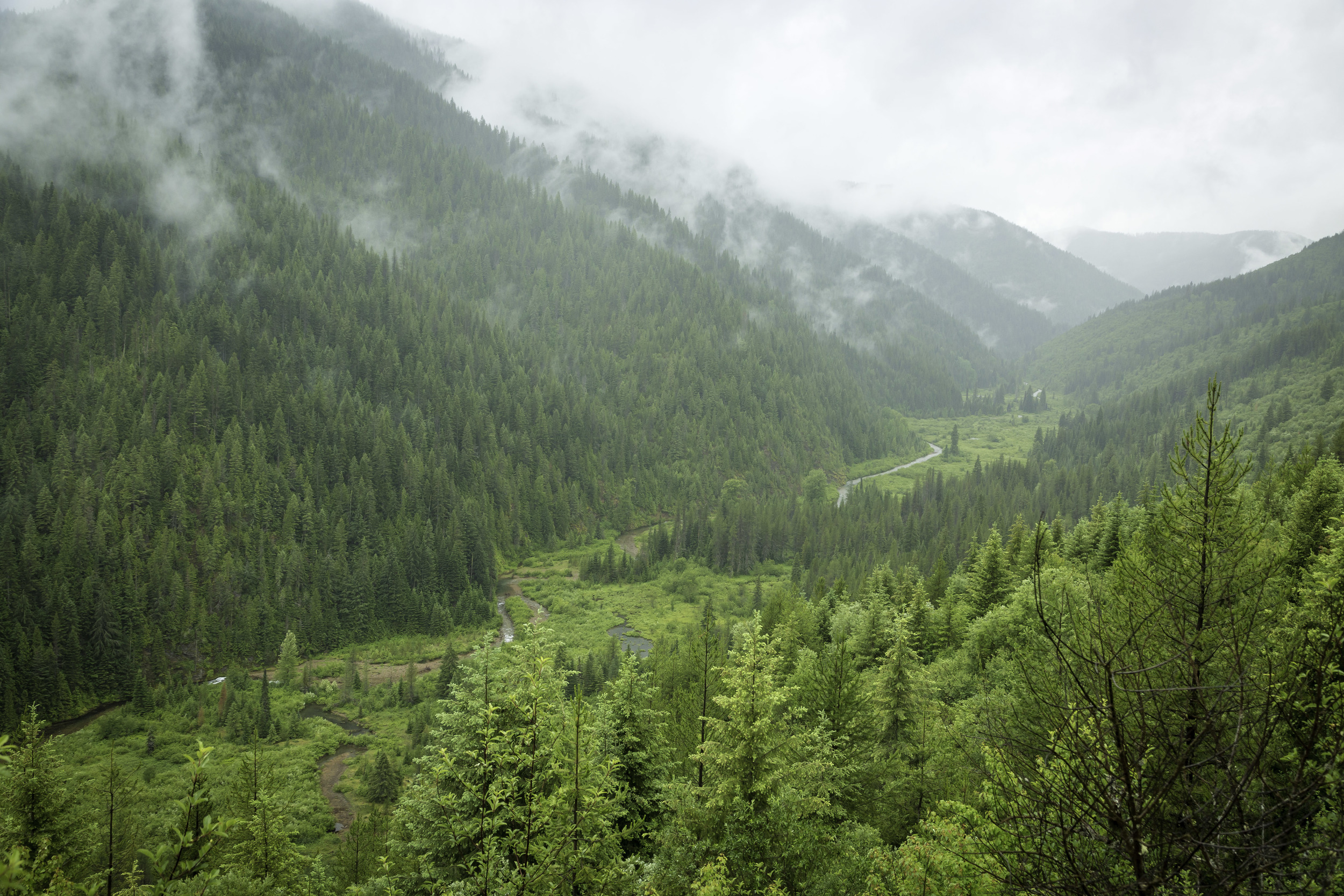 Slate Creek Drainage: Avery, Idaho