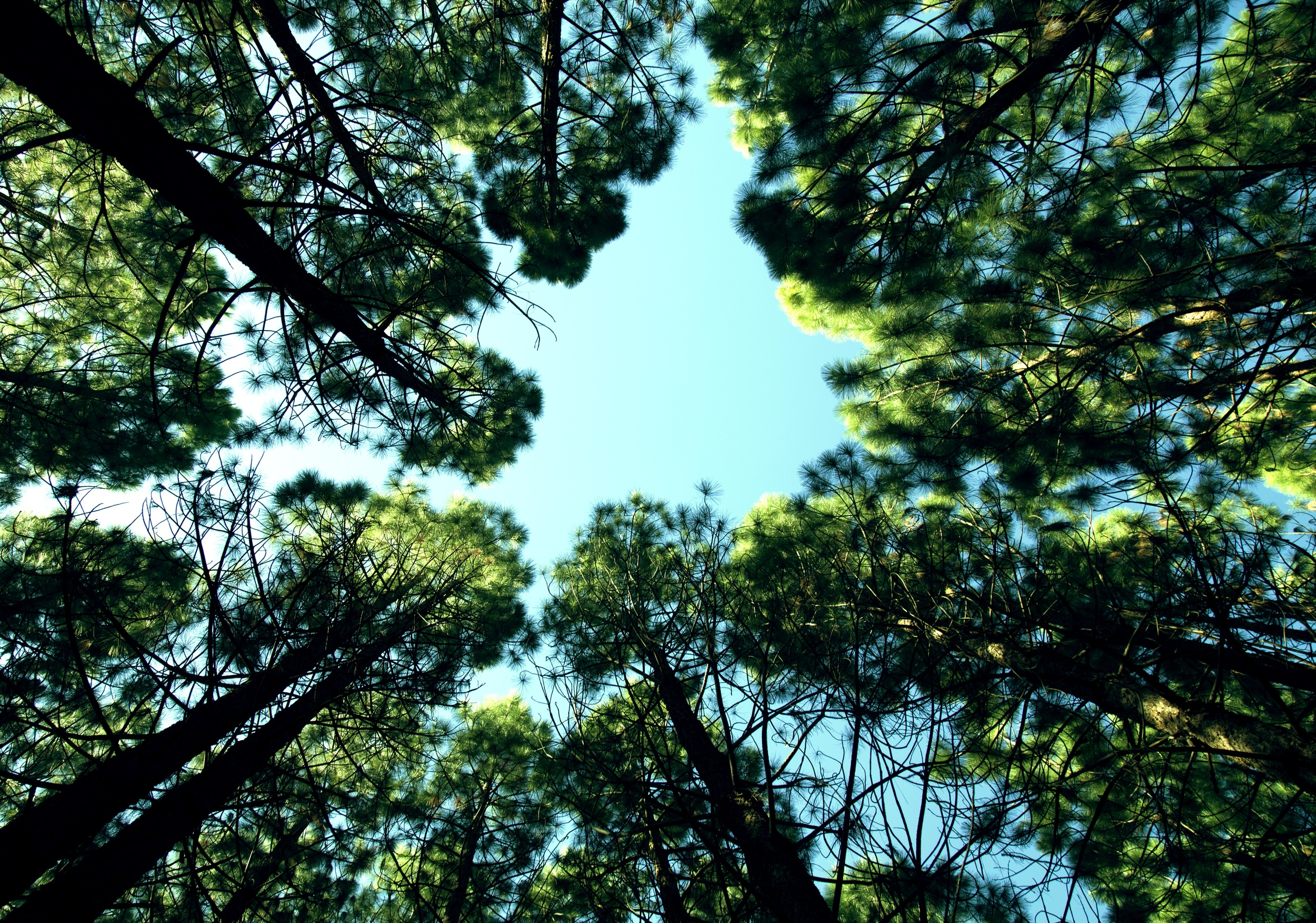 2015-10-Life-of-Pix-free-stock-photos-trees-sky-forest-mikewilson.jpeg