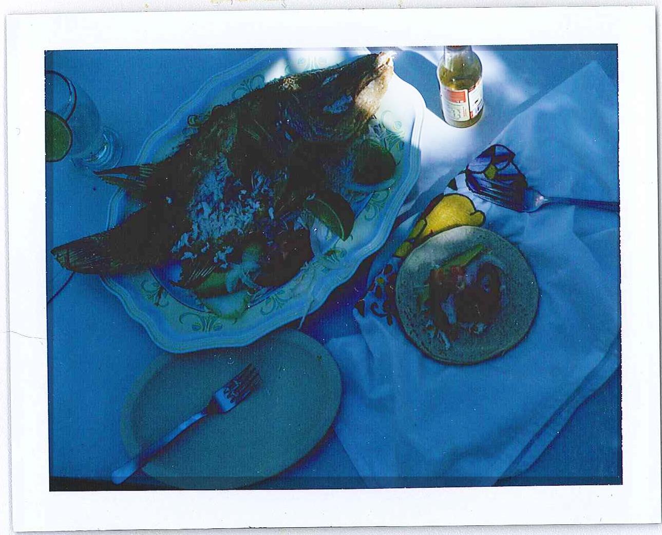 fish-pola.jpg