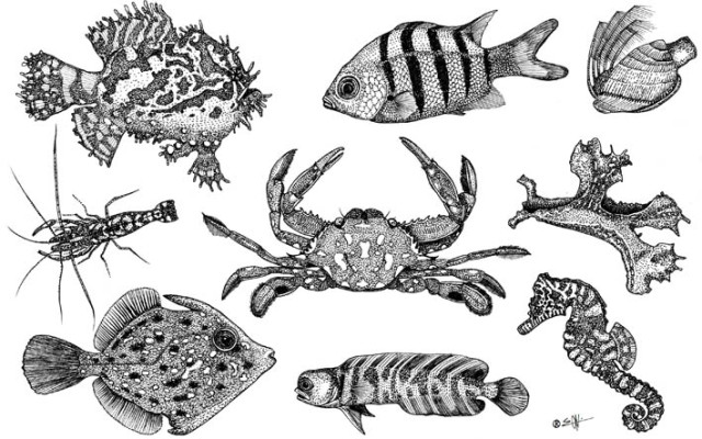 """Animals observed alive in  Sargassum natans  between august 15th and october 10th, 2014 near North Shore Park, North Miami Beach. O'Khæn, ink on paper, 9""""X12"""""""