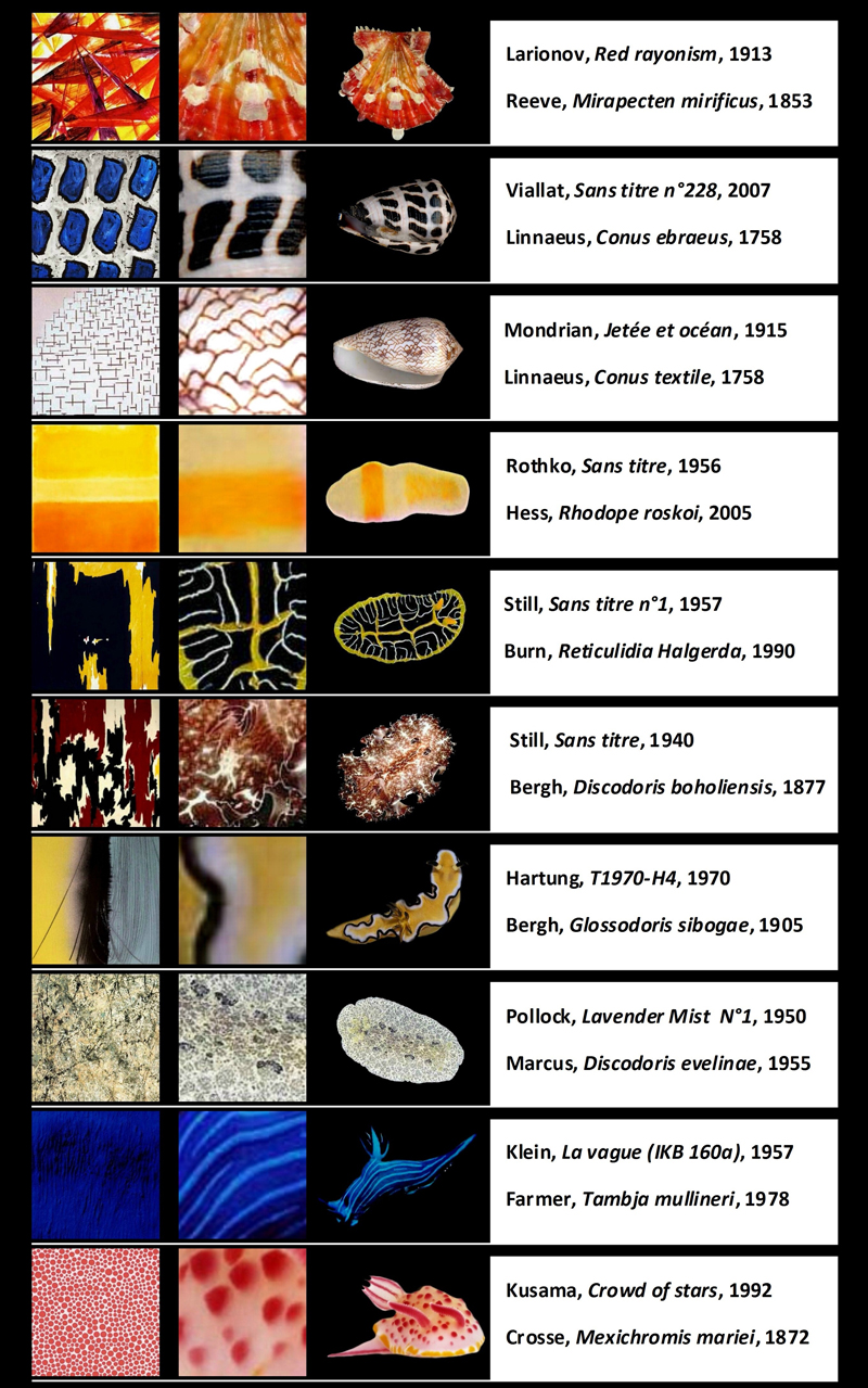 mollusks patterns comparison abstract art