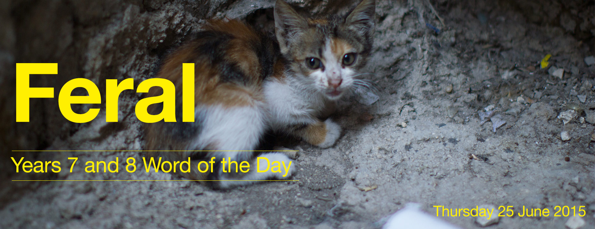 Word-of-the-Day-119.jpg