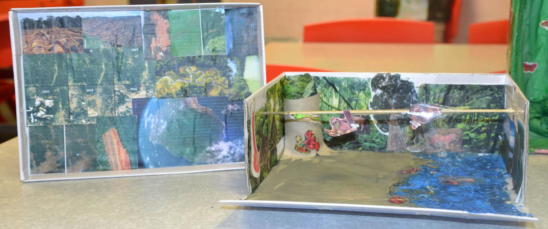 24 Rainforest in a Box-2.jpg
