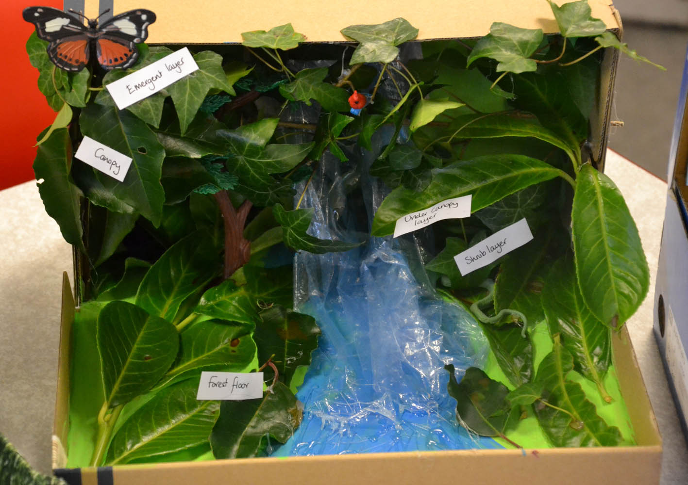 24 Rainforest in a Box.jpg