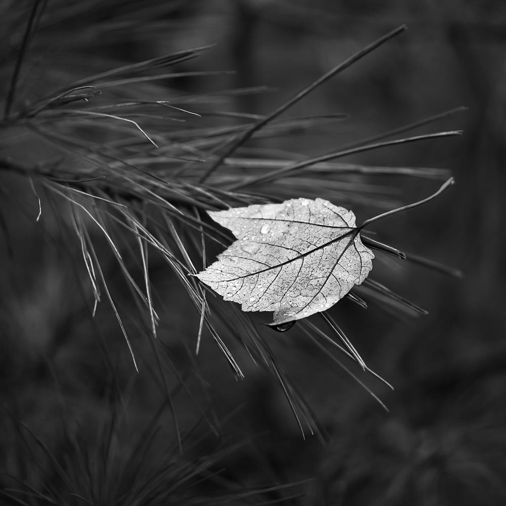 momentary stillness