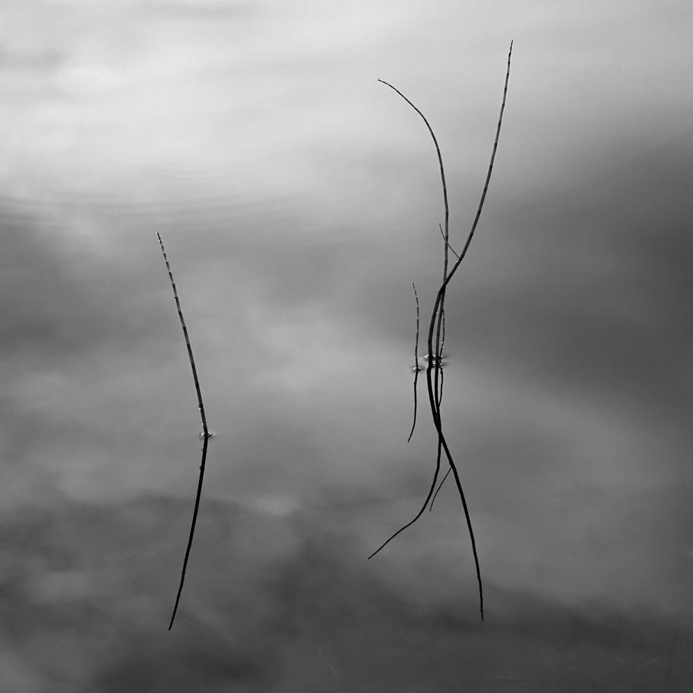 simple reeds