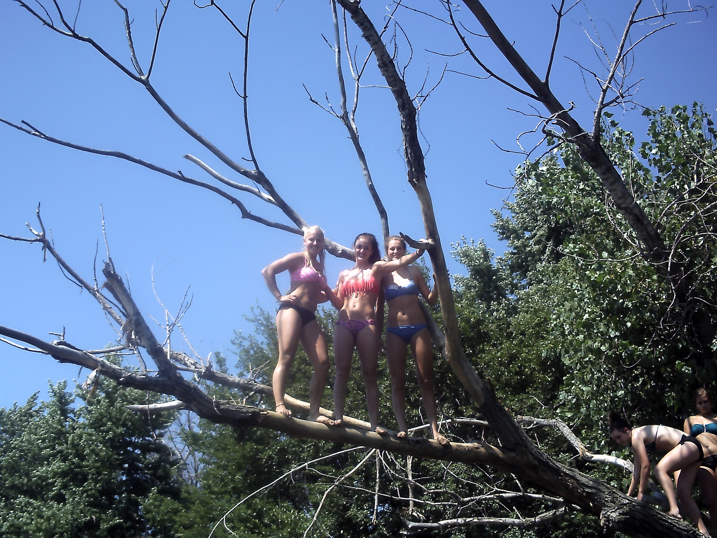 Don't climb trees and jump into the water...like these daring ladies.