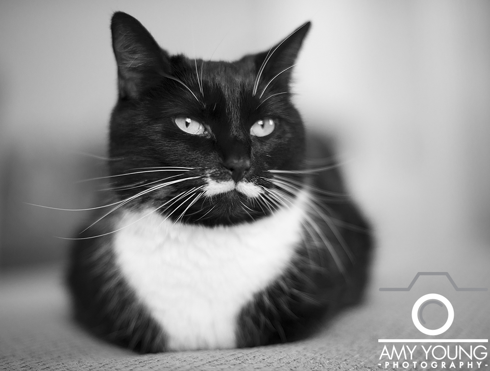 Amy Young Photography : Cats1