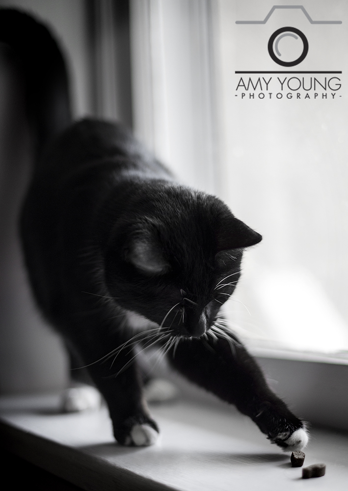 Amy Young Photography: Cats2