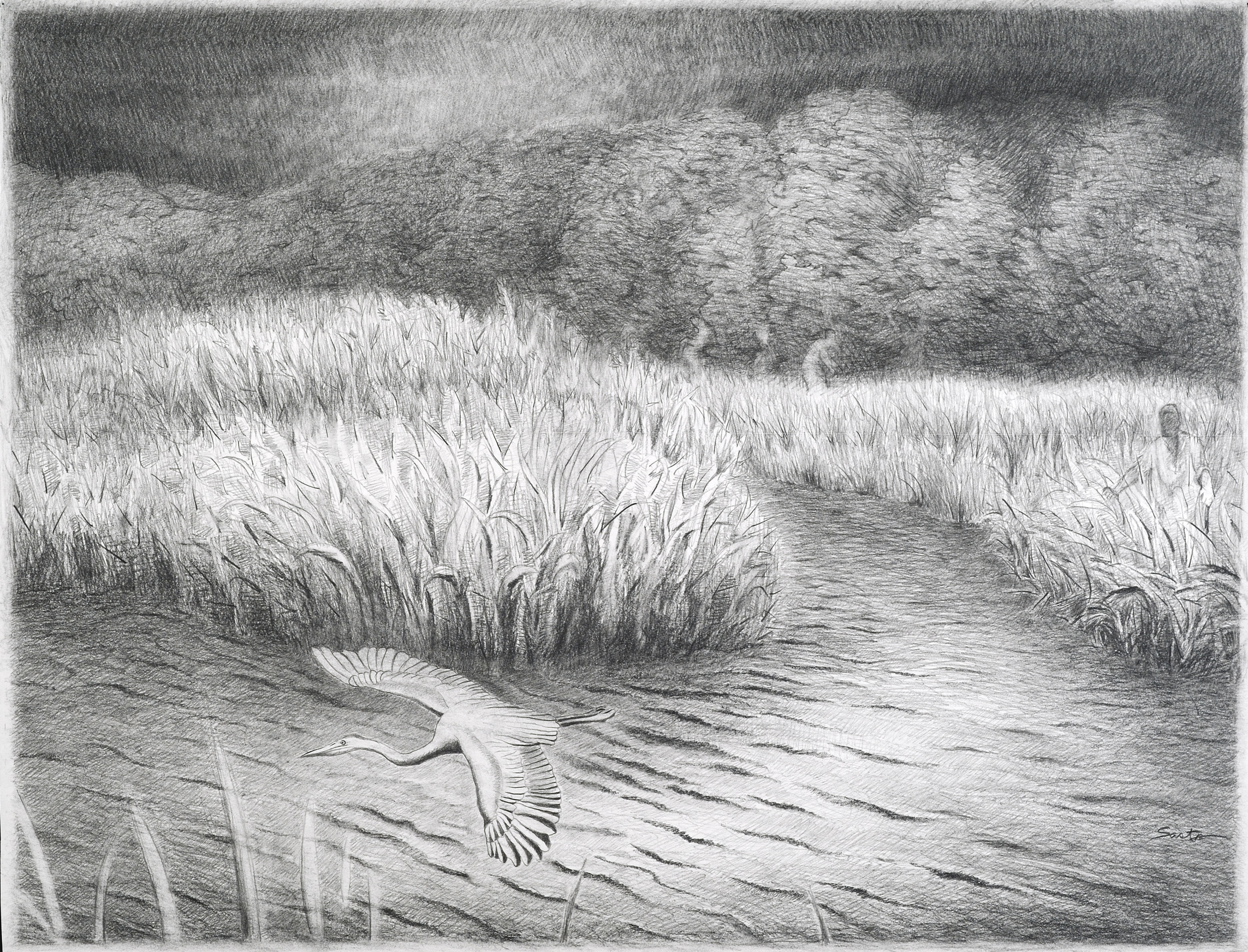 """<style>  P { font-size : 8pt } </style> Startled Heron <br> 18x24"""" <br> Graphite"""