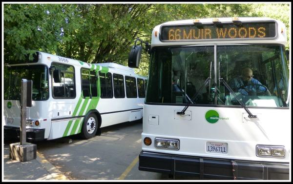 Muir-Woods-Shuttle.jpg