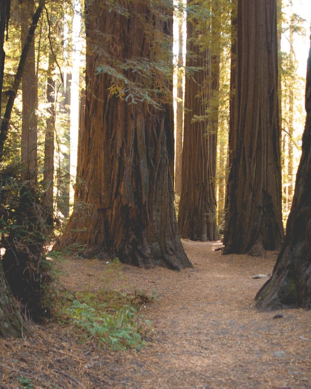 california-975937_1920.jpg
