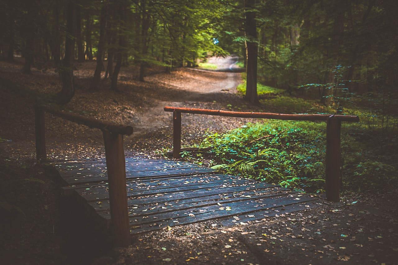 wood-nature-forest-bridge.jpg