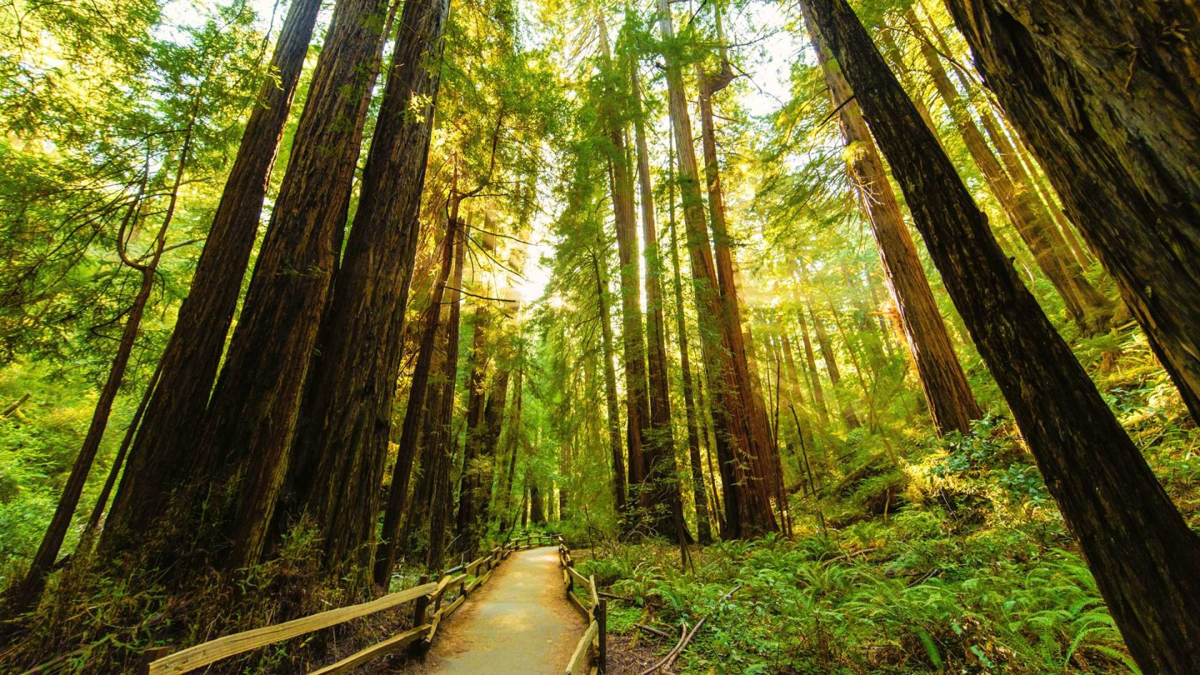 How to get to muir woods without a car