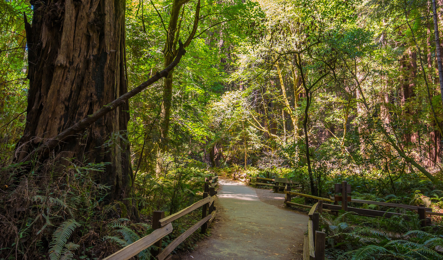 How far is muir woods from san francisco