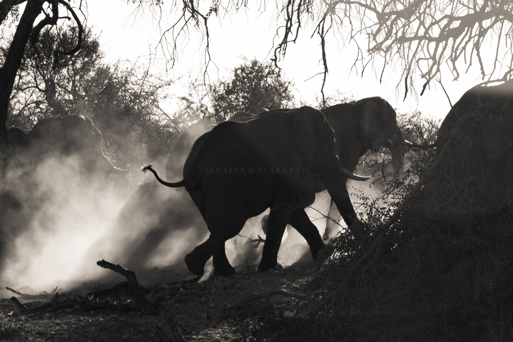 elephant dust and bush.jpg