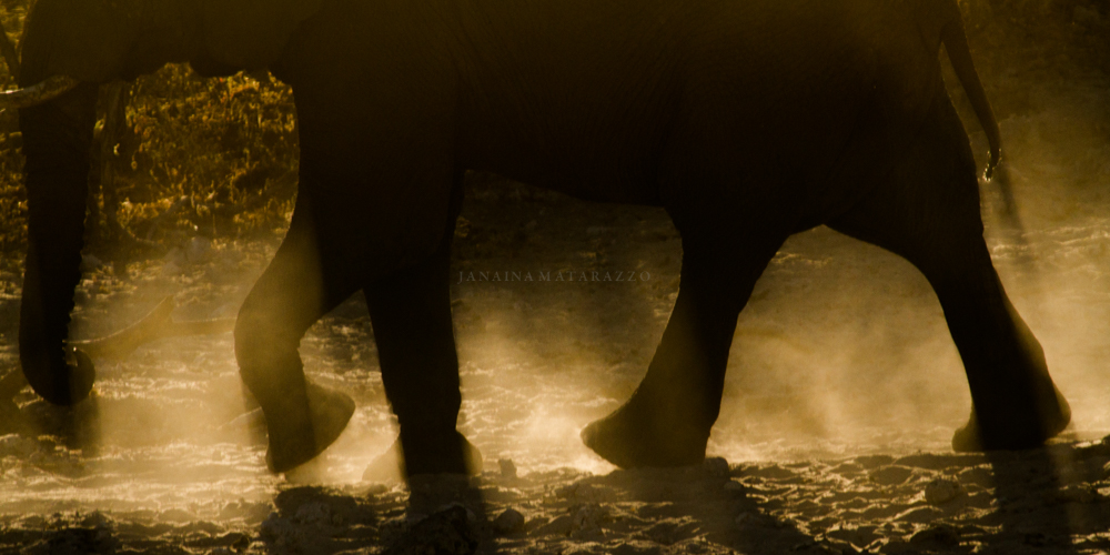 elephant legs and dust.jpg