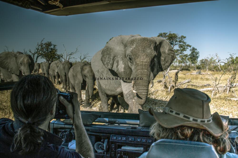 JMP_2099_safariadventure.jpg