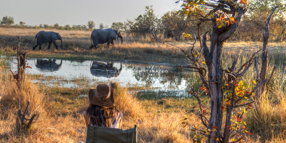 JMP_2688_safariadventure.jpg