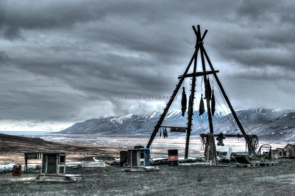 JMP_3776_arctic.jpg