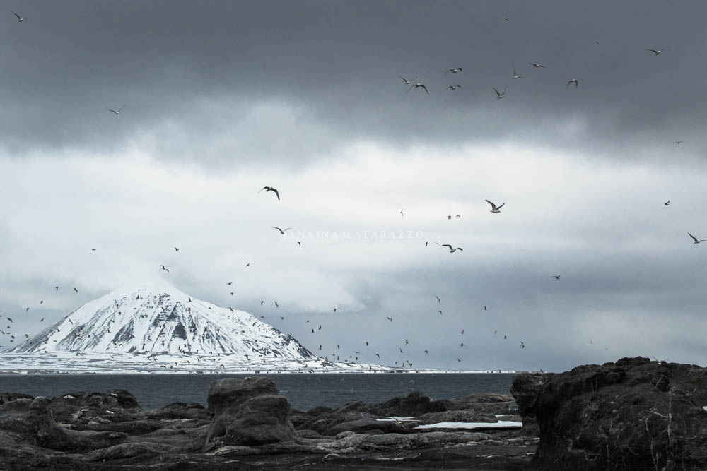 rock clouds and birds.jpg
