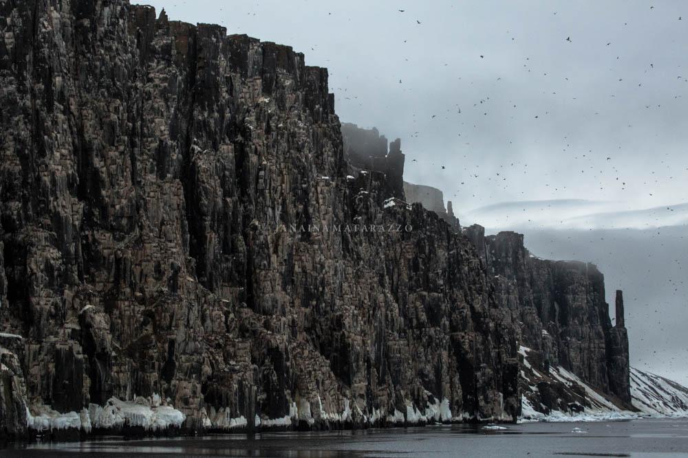 cliff of cape fanshaw.jpg