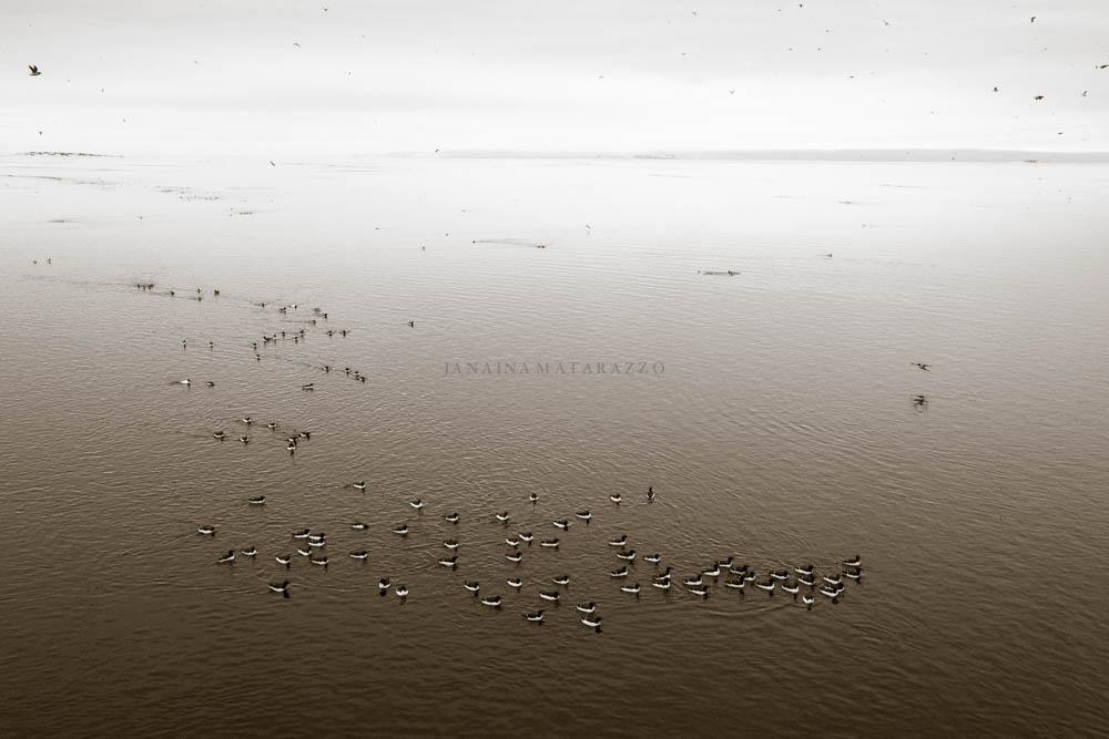 birds from the arctic ocean.jpg