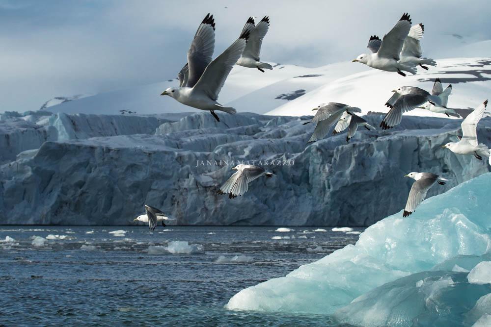 ice and gulls.jpg