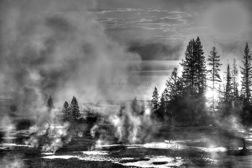 hot air around trees.jpg