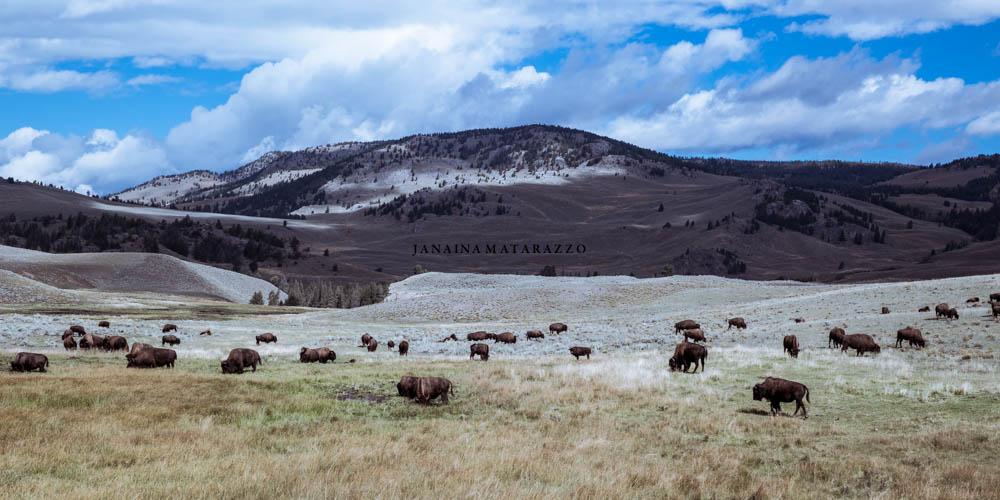 landscape with bisons.jpg