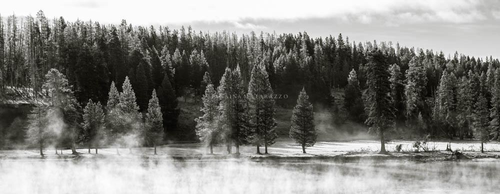 morning trees.jpg