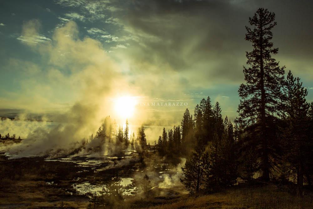 smoke sun and trees.jpg